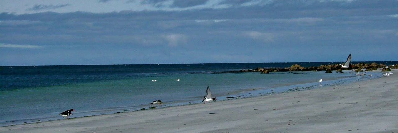 Bird watching in the Outer Hebrides